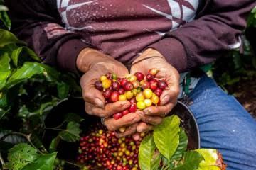 Tradicional u orgánica: dilema de la agricultura